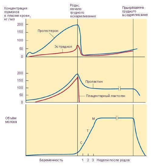 Прогестерон: норма у женщин и мужчин