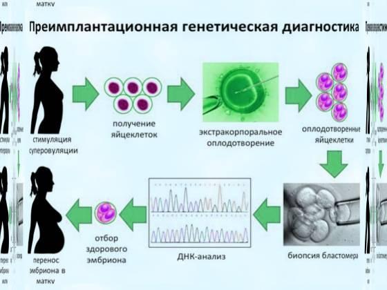Предимплантационная генетическая диагностика: показания и особенности проведения
