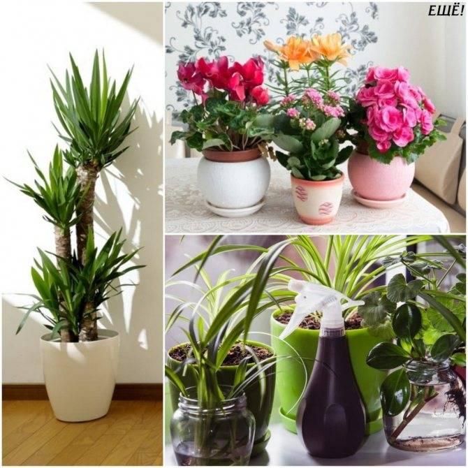 Комнатные растения для детской комнаты: какие лучше