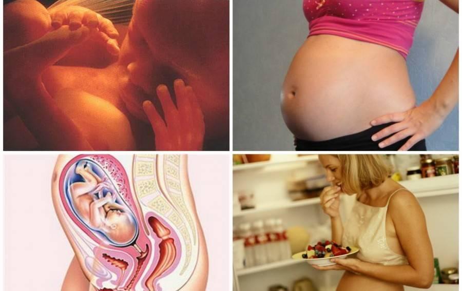 Календарь беременности. 38-я акушерская неделя
