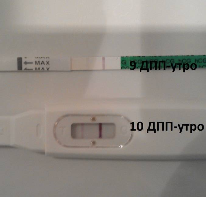 Жизнь после переноса эмбрионов | что рекомендуют врачи
