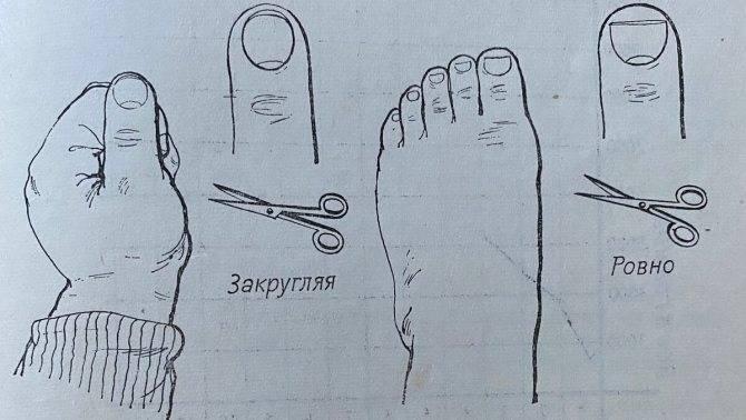 Правила и особенности стрижки ногтей новорожденному ребенку. как подстричь в первый раз?