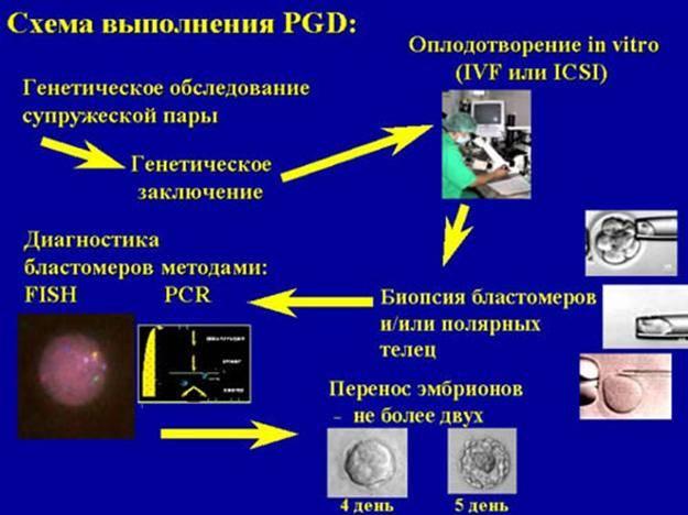 Зачем мы проводим генетическое тестирование доноров ооцитов?   линия жизни центр репродукции