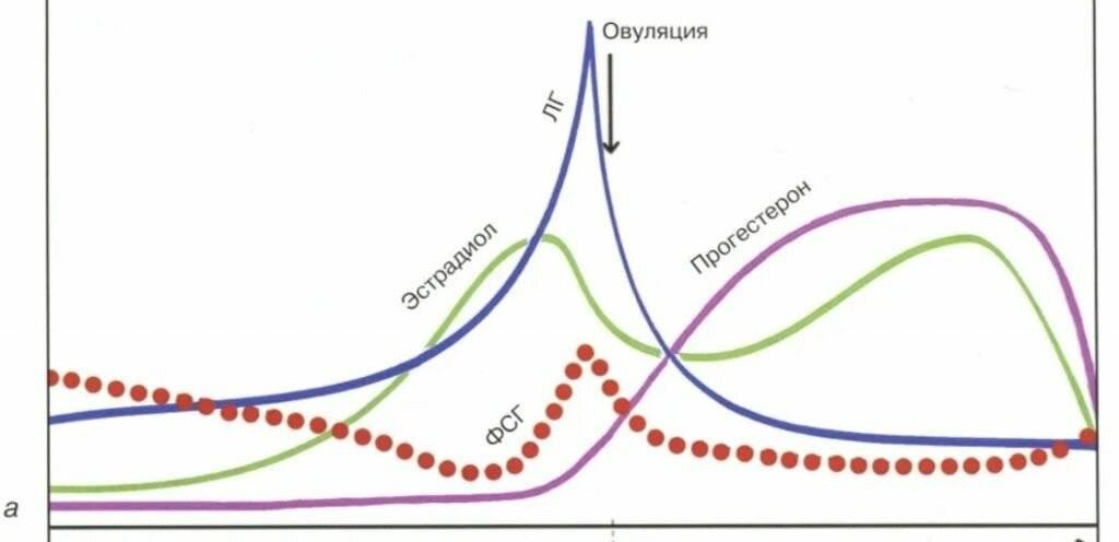 Прогестерон в лютеиновой фазе: что это, функции, норма, фазы цикла