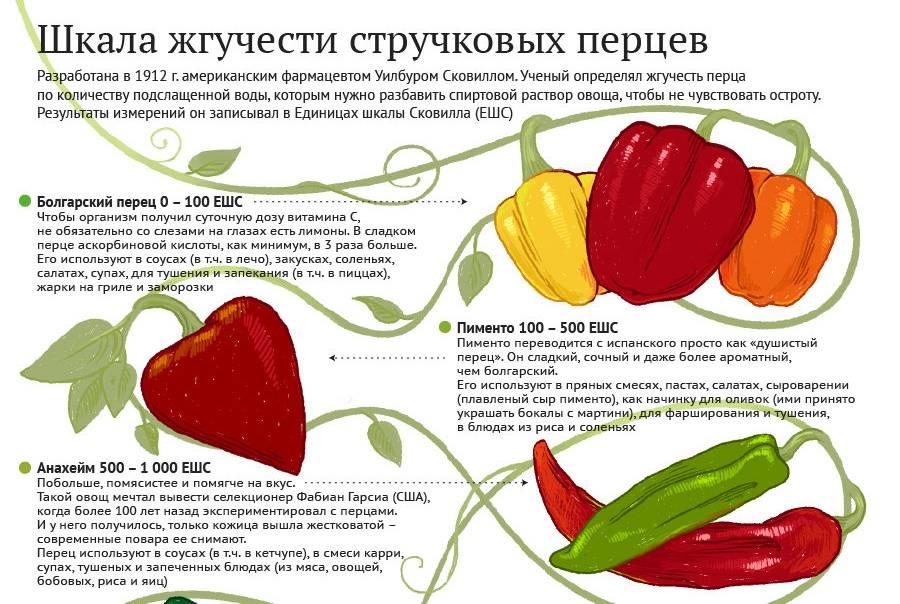 Когда можно детям давать болгарский перец и сколько