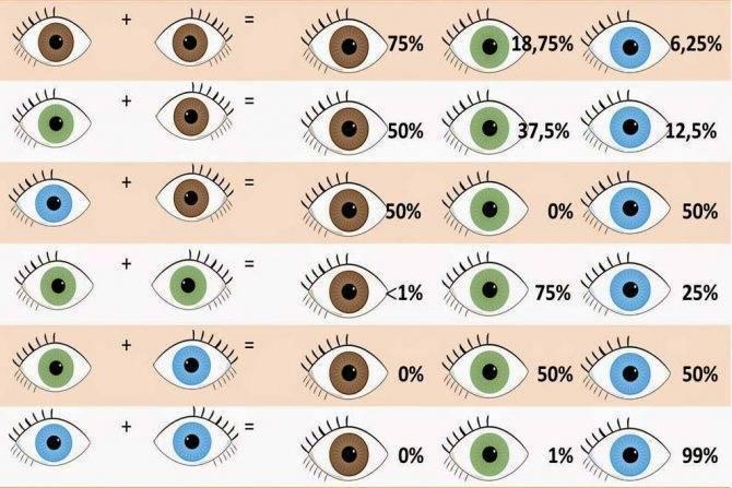 Цвет глаз у ребенка от родителей - таблица вероятностей