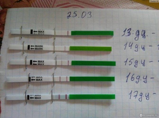 Что показывает тест на овуляцию при беременности. на какой день покажет результат? может ли у беременных быть положительным тест на овуляцию