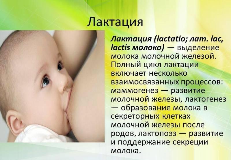 Физиология лактации или как вырабатывается грудное молоко. | грудное вскармливание