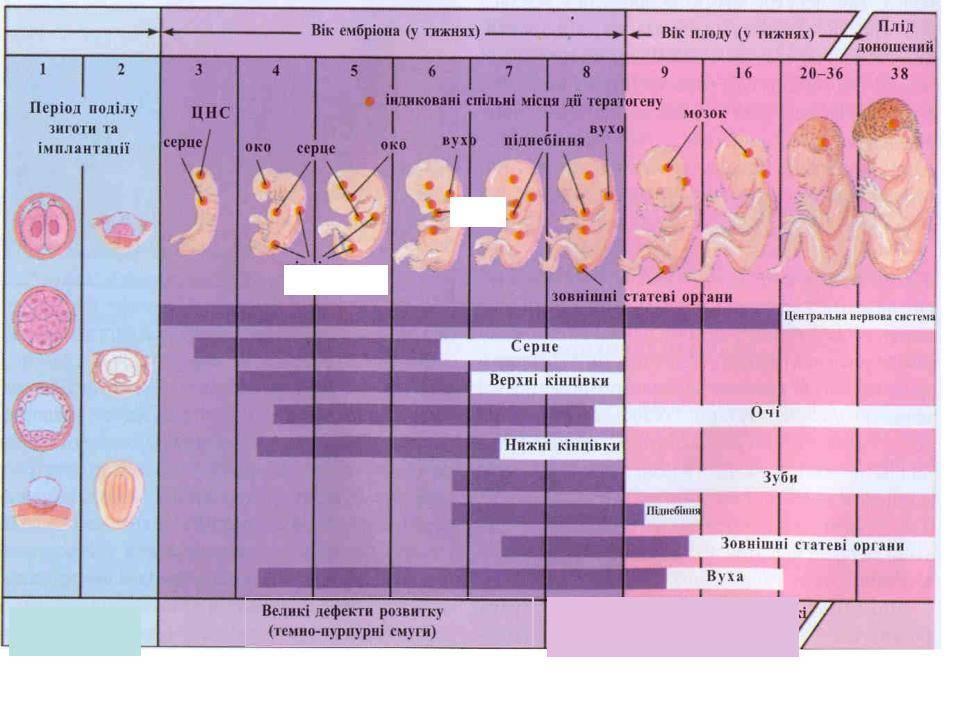 Подготовка к эко в клинике gms эко – этапы подготовки перед процедурой