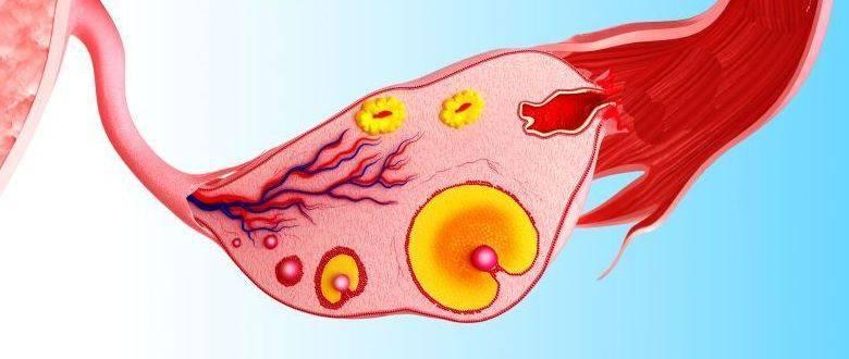 Заболевания цнс: классификация, симптомы, лечение