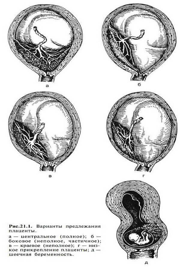 Физиологические изменения в организме женщины при беременности