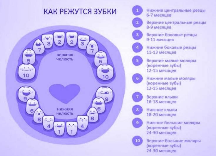 Во сколько режутся первые зубки у грудничков?