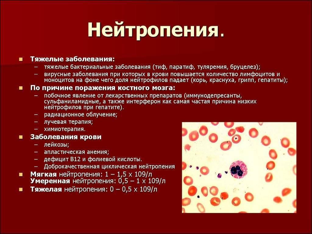Сегментоядерные нейтрофилы в анализе крови — причины и последствия отклонений от нормы у детей или взрослых