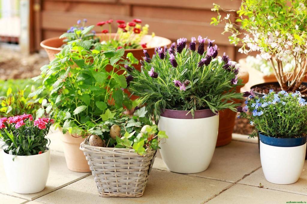 Комнатные цветы для школы: какие цветы можно в школе, цветы запрещенные в школе