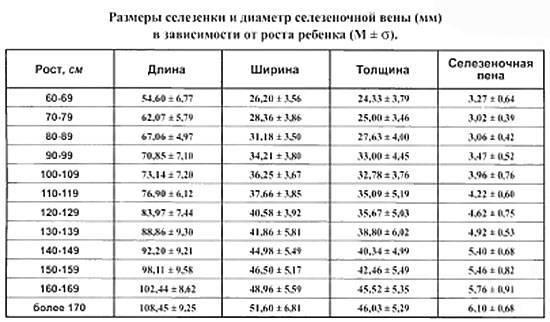 Размеры печени на мрт в норме  заболевания и отклонения влияющие на увеличение печени на мрт