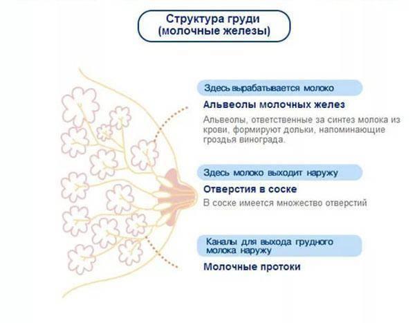 Грудь при беременности: как меняется, когда болит, по неделям — медицинский женский центр в москве