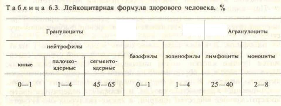 Лейкоцитарная формула: исследования в лаборатории kdlmed