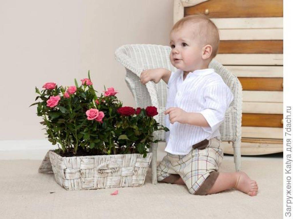 Самые подходящие цветы для школьного кабинета: фото, названия и описания