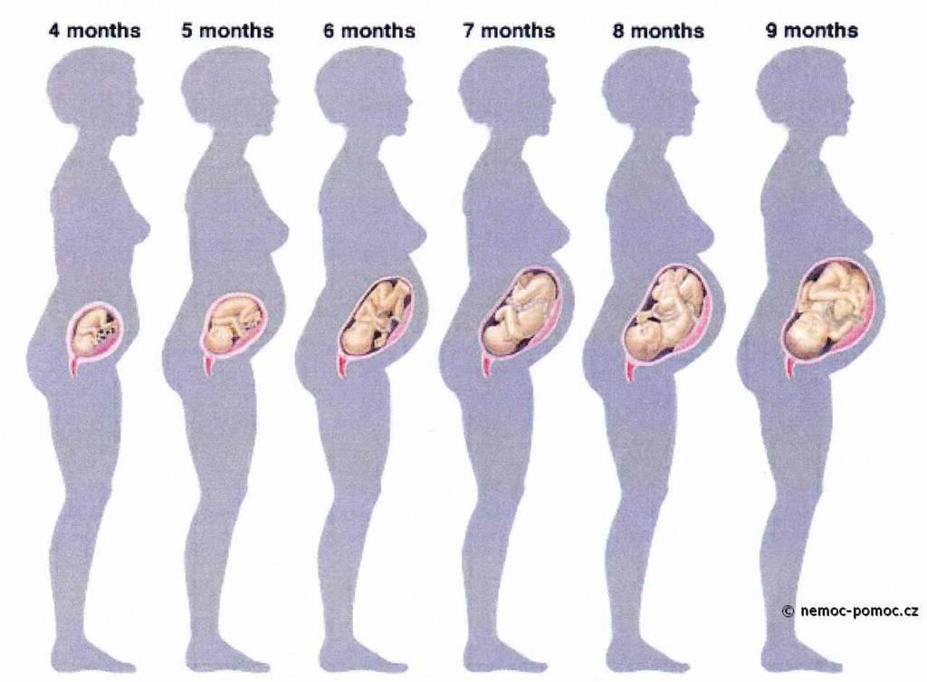 Расположение плода в животе по неделям беременности фото