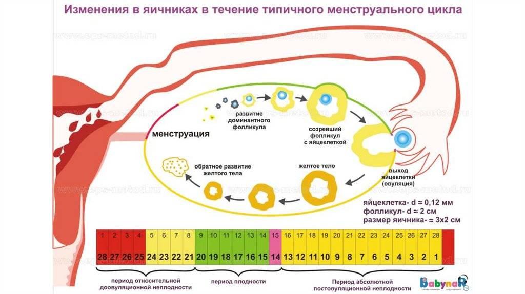 Беременность после приема противозачаточных таблеток