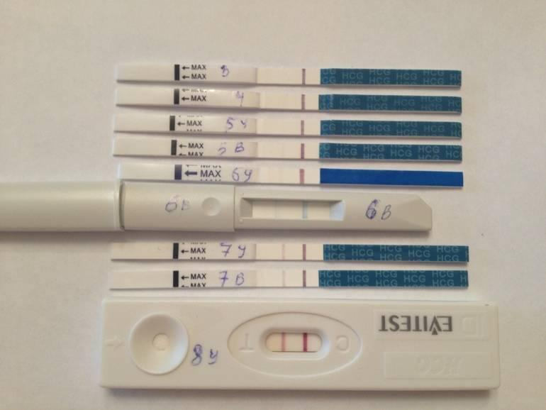 10 день после переноса эмбрионов