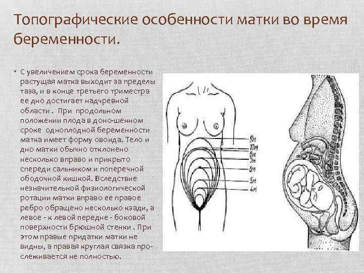 Беременность без симптомов – возможно ли это?