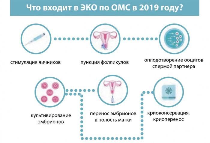 Эко по полису омс 2021 в клинике линия жизни в москве  - как получить квоту на бесплатное эко и сделать по программе омс