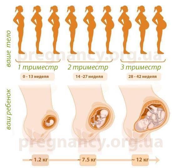 Прерывание беременности в 3-4 или 11-12 недель. методы прерывания беременности на разных сроках