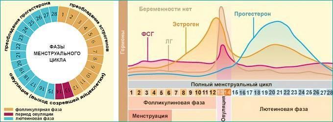 Прогестерон: исследования в лаборатории kdlmed