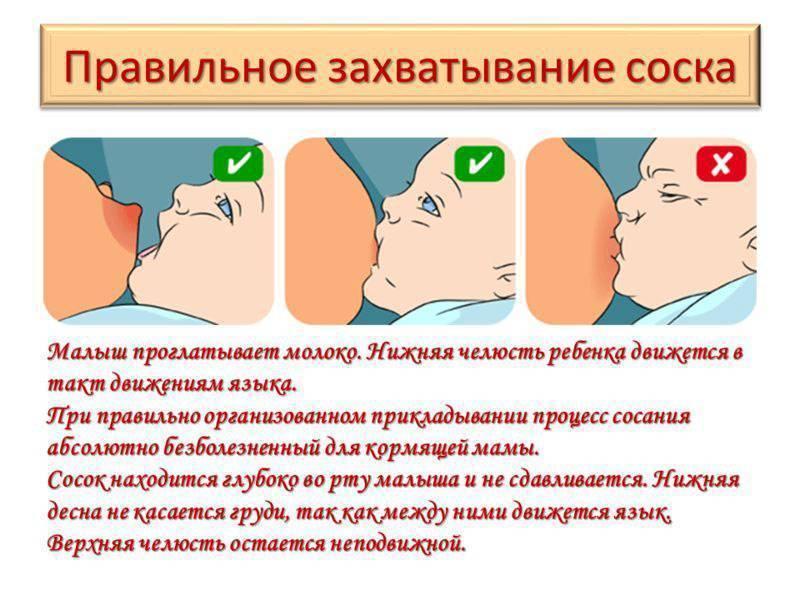Как правильно прикладывать ребенка к груди, инструкция для мамы