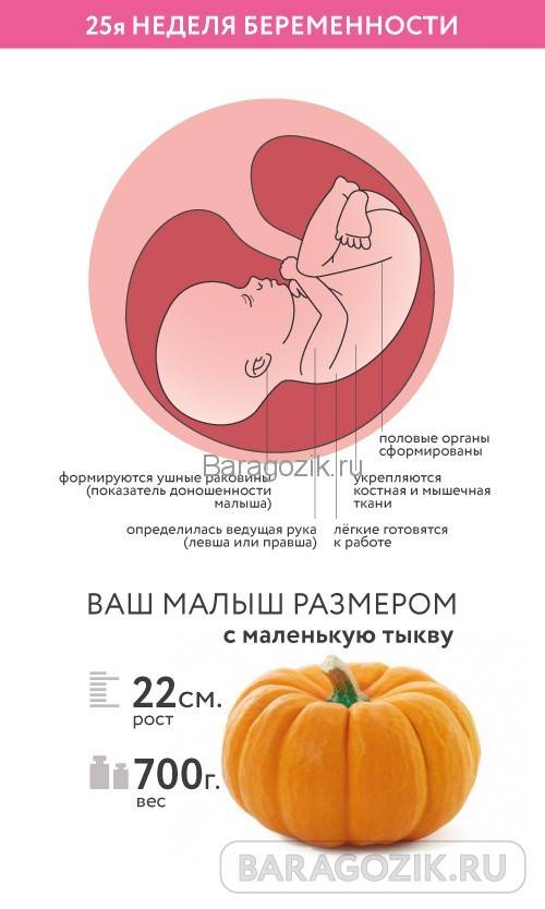 25 неделя беременности: признаки и ощущения женщины, симптомы, развитие плода