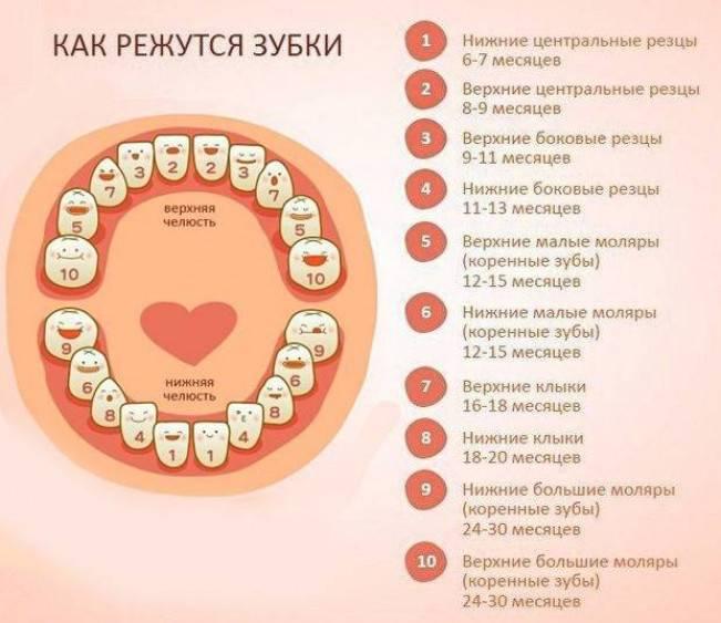 Смена молочных зубов - особенности, сроки   разбираемся - центр стоматологии «тихонова» в туле