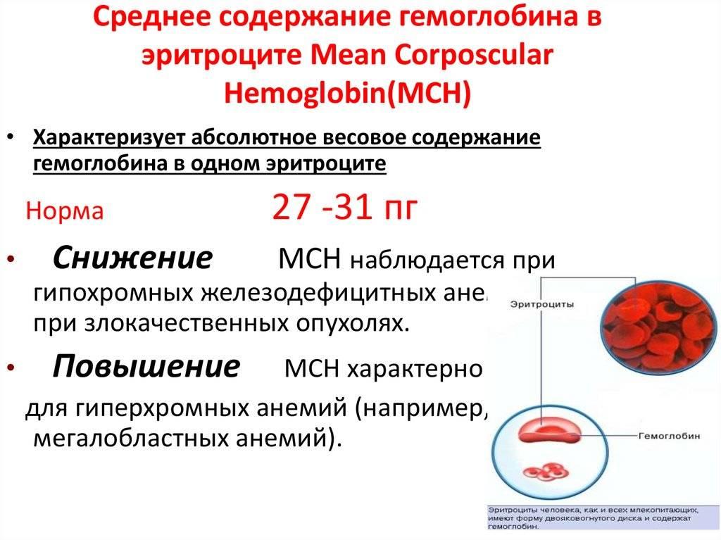 Почему средняя концентрация гемоглобина в эритроцитах понижена?