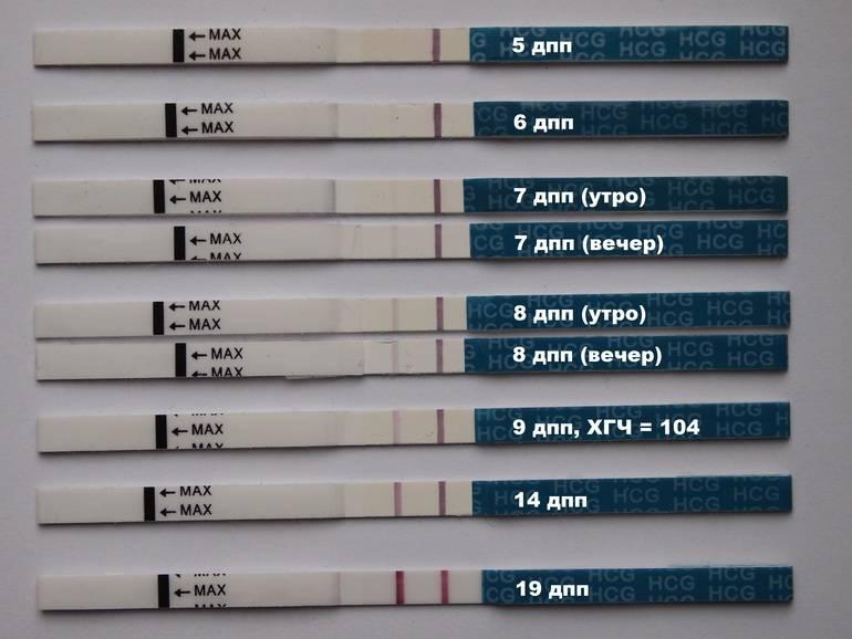 Какой оптимальный день для переноса эмбрионов при эко?