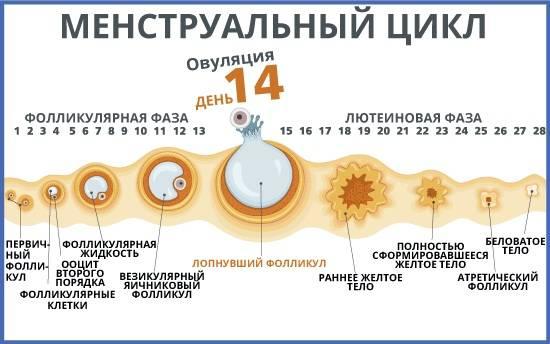 Заморозка яйцеклеток: как происходит?