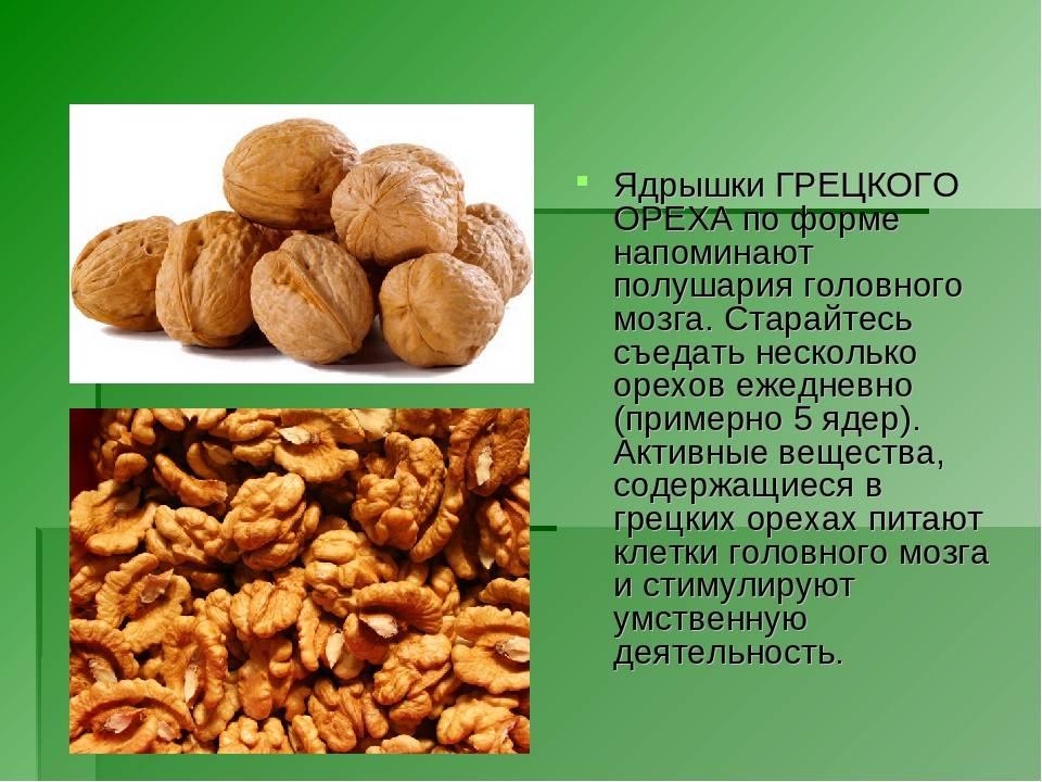 Бразильский орех – польза и вред бразильского ореха для женщин и мужчин