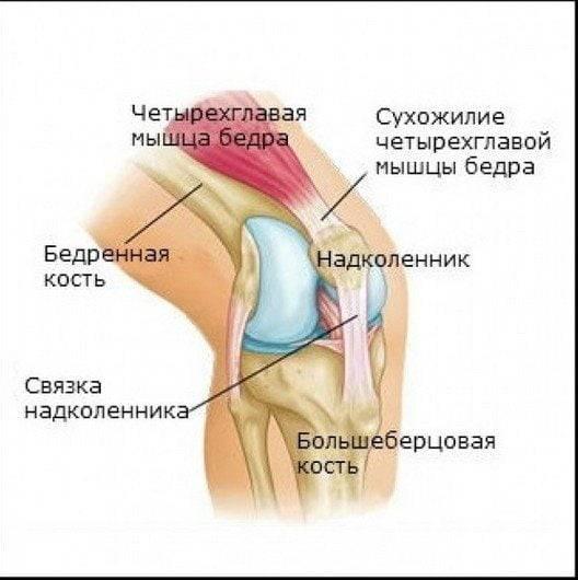 Боль в колене при сгибании - причины, другая симптоматика, профилактика
