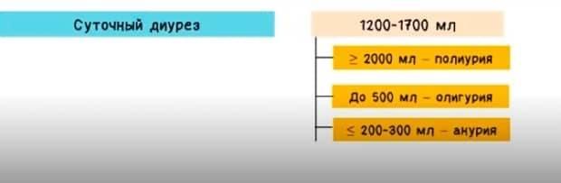 Суточный диурез при беременности: норма, таблица, пример расчета