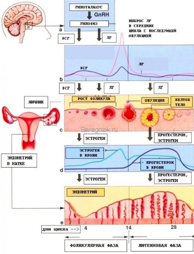 Боли в пояснице перед менструацией | москва