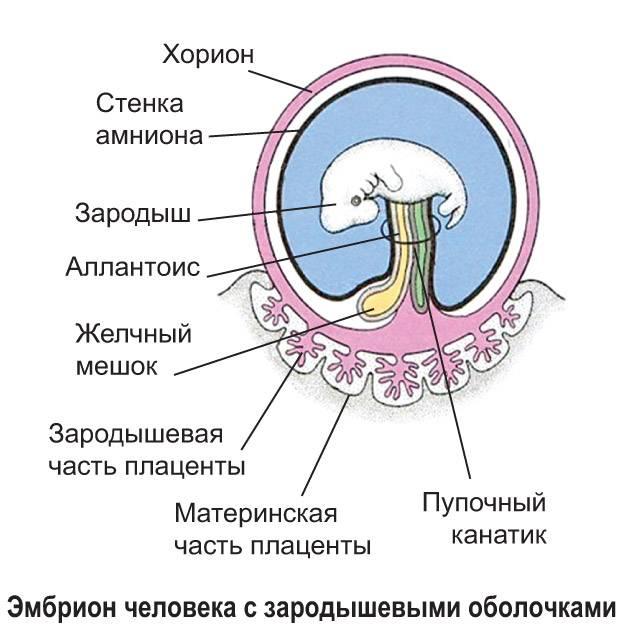 Омфалоцеле