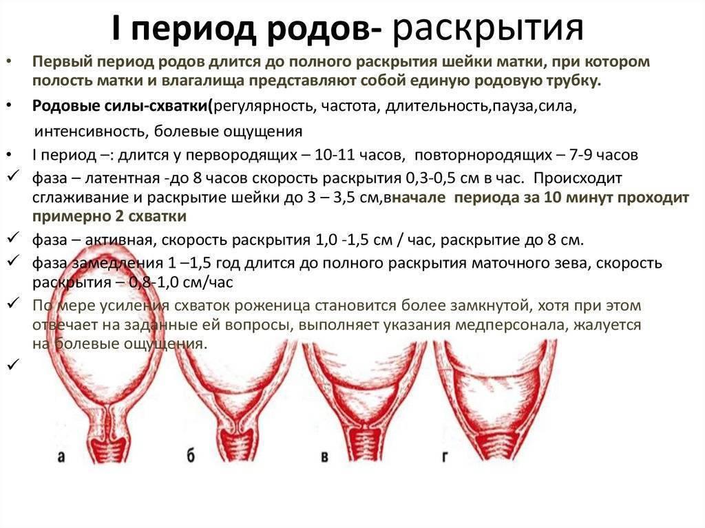 Особенности раскрытия шейки матки
