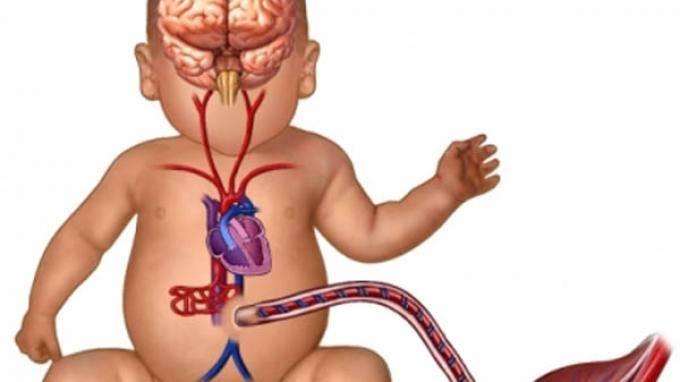 Аномалии и патологии органов пищеварительной системы плода, выявляемые на узи