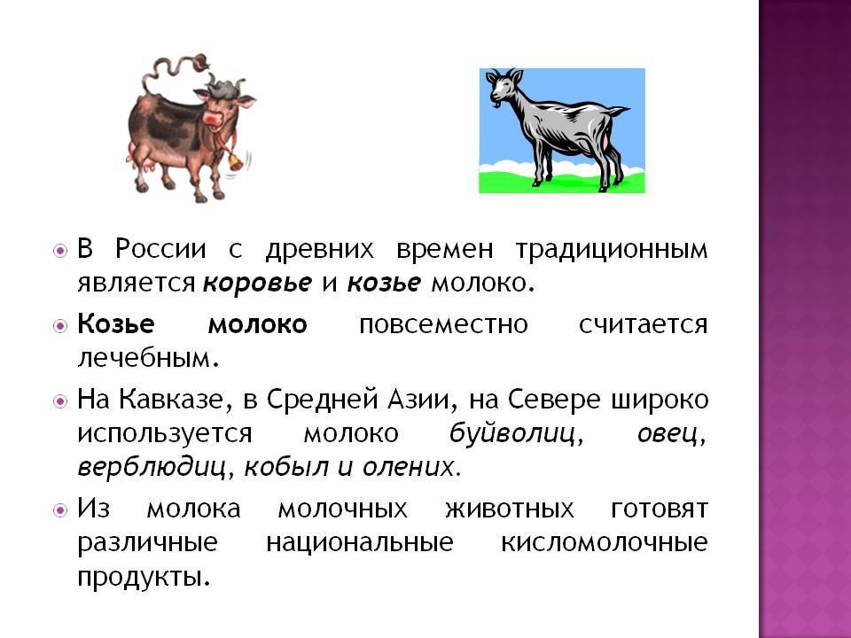 10 причин выбрать козье молоко вместо коровьего :: polismed.com