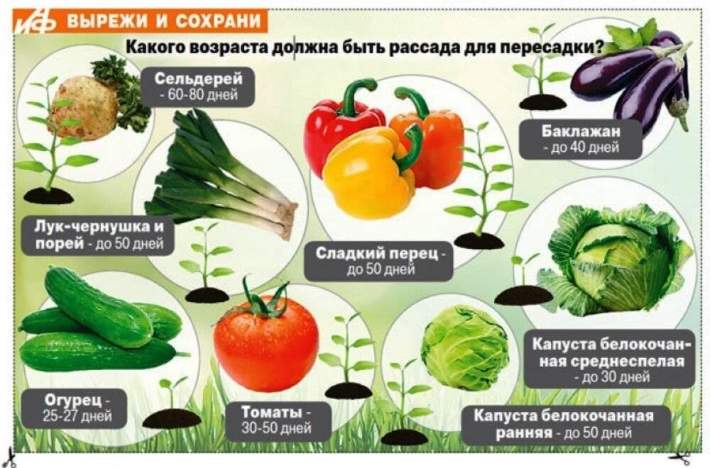Когда можно давать ребенку болгарский перец, в каком виде