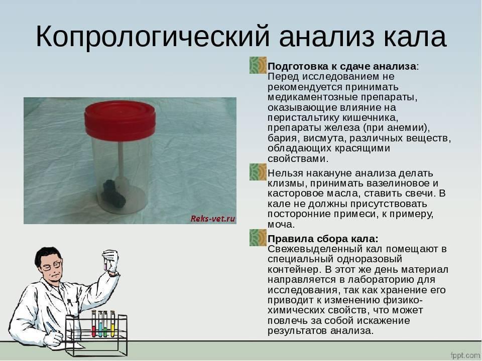 Когда собирать кал, сколько можно хранить анализ на яйцеглист, сколько надо?
