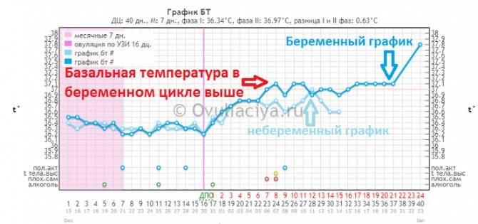 Определение беременности по базальной температуре: как и где измерить - goodmummy.ru