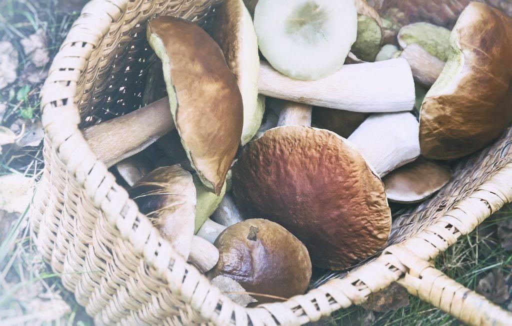 Можно ли употреблять грибы при грудном вскармливании и какие?