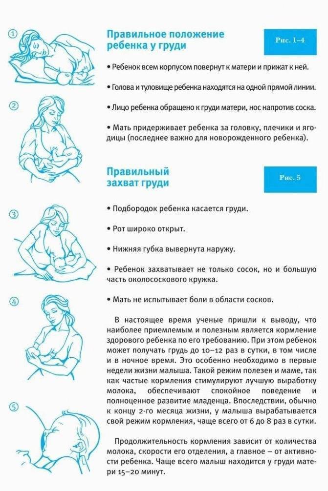 Как правильно кормить новорожденного грудным молоком, давать грудь по часам или по требованию?