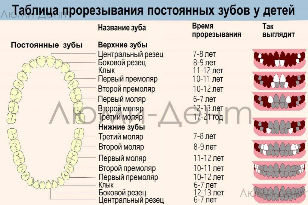 Коренные (постоянные) зубы у детей | детская стоматология светофор
