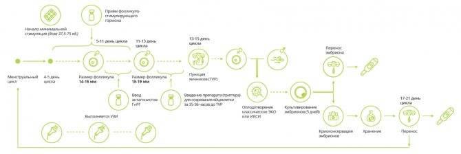 Подсадка эмбрионов по ЭКО: как происходит перенос в матку, на какой день цикла делают, каковы шансы?